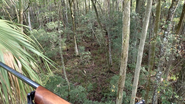 view from deer stand on Lower Suwannee NWR